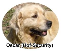 Oscar (Wach- und Schmusehund)